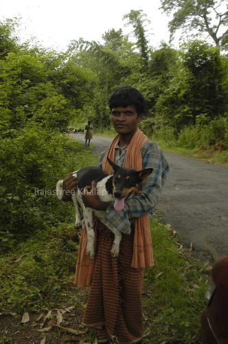 One of the village dogs sampled for the Shannon and Boyko genetic study. She belonged to a family in the Angul district of Odisha, Eastern India.