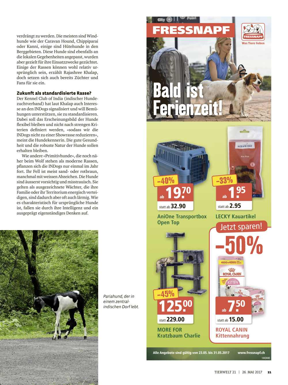 Esther Wullschleger Article on INDogs for Tierwelt
