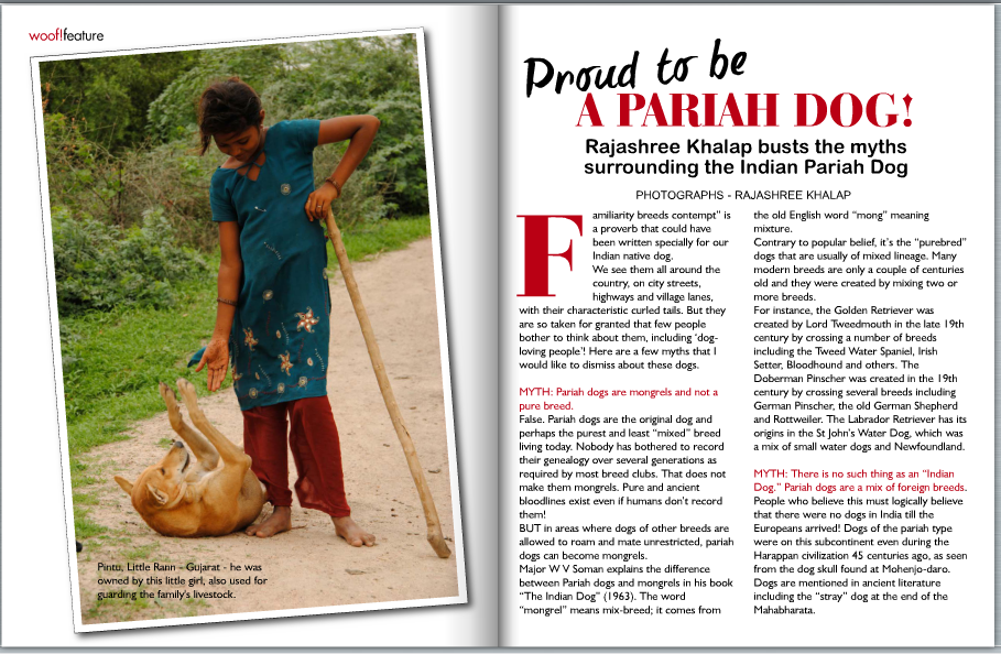 Proud to be a Paraih Dog 1